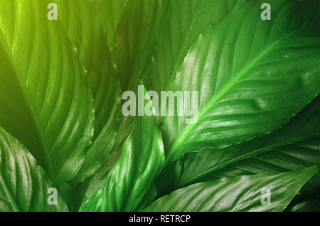 Green Leaves background,Creative layout made of green leaves. Flat lay. Nature concept. - Stock Photo