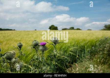 Near Normanby, Lincolnshire, UK, July 2017, View of Lincolnshire Wolds from Viking Way - Stock Photo
