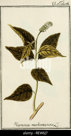 . Dreyhundert auserlesene amerikanische Gewchse nach linneischer Ordnung. Plants -- West Indies; Plants -- Central America. . Please note that these images are extracted from scanned page images that may have been digitally enhanced for readability - coloration and appearance of these illustrations may not perfectly resemble the original work.. Zorn, Johannes, 1739-1799; Jacquin, Nikolaus Joseph, Freiherr von, 1727-1817. Nrnberg, Auf Kosten der Raspischen Buchh. - Stock Photo