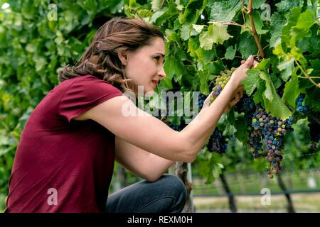 RACHAEL LEIGH COOK  Character(s): Frankie Baldwin  Film 'AUTUMN IN THE VINEYARD' (2016)  Directed By BALTASAR KORMAKUR  31 October 2016  SAW89837  Allstar Picture Library/THE HALLMARK CHANNEL  **WARNING** This Photograph is for editorial use only and is the copyright of THE HALLMARK CHANNEL  and/or the Photographer assigned by the Film or Production Company & can only be reproduced by publications in conjunction with the promotion of the above Film. A Mandatory Credit To THE HALLMARK CHANNEL is required. The Photographer should also be credited when known. No commercial use can be granted with - Stock Photo