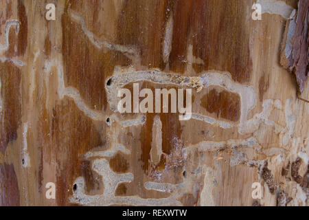 Background abstract composition of beetle tunnels under the bark of an old tree - Stock Photo