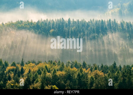 Landscape in the National Park Sächsische Schweiz with trees and fog at sunrise - Stock Photo