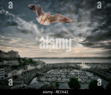DIGITAL ART: Flight TQ1  (Gull above Torquay Harbour, Devon, Great Britain) - Stock Photo