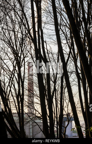 View of a smoke stack as seen through a forest of Spring trees before they sprout their leaves, Seattle, WA USA - Stock Photo