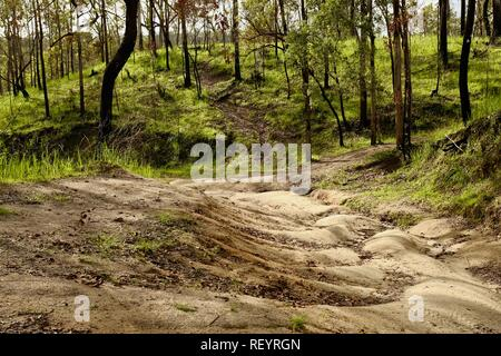 A dirt fire access road in Mia Mia State Forest, Queensland, Australia - Stock Photo