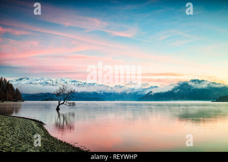 Winter at Lake Wanaka, Otago, New Zealand, with birds roosting in the single tree and mist rising from the water. - Stock Photo