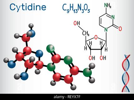 Cytidine - pyrimidine nucleoside molecule, is important part of RNA. Structural chemical formula and molecule model. Vector illustration - Stock Photo