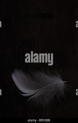 Light white feather against dark wooden background - Stock Photo