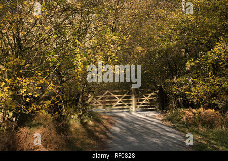 Wooden gate with overhanging autumn tree foliage along a sunny footpath in the countryside - Stock Photo