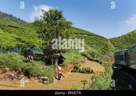 Train passing through a tea plantation in Sri Lanka - Stock Photo