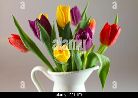 Bouquet of fresh multicolor tulips with drops of dew in white  jug. - Stock Photo