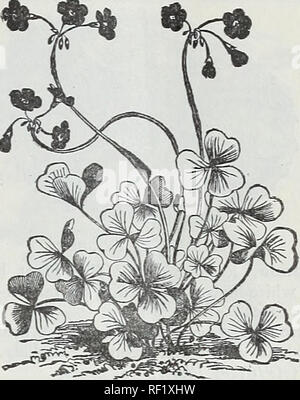 . Catalogue of dutch bulbs and other flowering roots, also seeds and plants for autumn planting and house decoration in winter. Flowers Seeds Catalogs; Bulbs (Plants) Catalogs. MESEMBRYANTHEMUM. Mesembryanthemum, cardifoliuin variegatum. (Variegated Ice Pla&t.) Exceedingly valuable for baskets or vases, as its succulent character enables it to stand our hot and dry weather admirably. The star- like, purple flowers contrast finely with the creamy white foliage. 25 cents. Mesembryanthemum,^ra?;^>n^w. Very showy; pink and white. 25 cents. Marantas. Beautiful, ornamental foliage. They requi