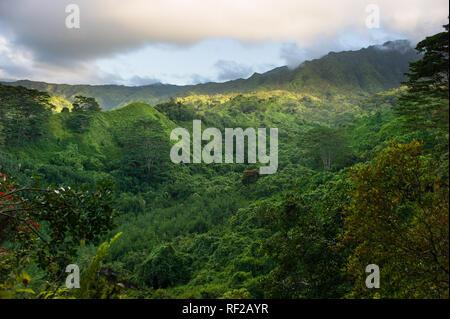 The Kuilau Ridge Trail explores Kauai's scenic mountainous interior in Hawaii, United States. - Stock Photo