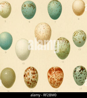 . Catalogue of the Collection of Birds' Eggs in the British Museum. . J 19 20 PaSSERIFORMES: TURDID/E. Please note that these images are extracted from scanned page images that may have been digitally enhanced for readability - coloration and appearance of these illustrations may not perfectly resemble the original work.. British Museum (Natural History). Department of Zoology. [Birds]; Ogilvie-Grant, W. R. (William Robert), 1863-1924; Reid, Philip Savile Grey, 1845-1915; Oates, Eugene William, 1845-1911. London - Stock Photo