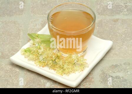 Small-leaved Lime or Linden (Tilia cordata), herbal tea - Stock Photo