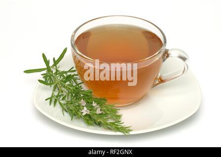 Summer Savory (Satureja hortensis), herbal tea - Stock Photo