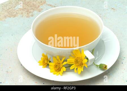 Leopard's Bane, Wolf's Bane or Mountain Arnica (Arnica montana), herbal tea - Stock Photo