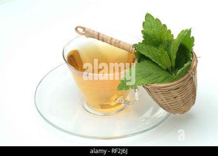 Lemon Balm (Melissa officinalis), herbal tea, medicinal tea - Stock Photo