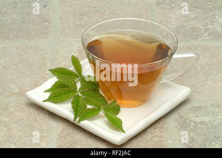 Musk-Mallow (Malva moschata), herbal tea - Stock Photo