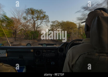 Game drives are an exciting way for tourists to experience the Majete Wildlife Reserve in southern Malawi; here a safari guide drives an open vehicle - Stock Photo