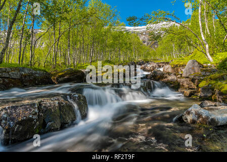 A turbulent river among boulders in a valley overgrown with birches under a blue sky. Norway, Saltfjellet. - Stock Photo
