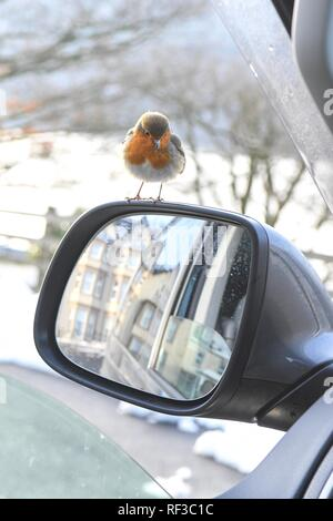 Loch Lomond, Scotland, UK. 24th Jan, 2019. uk weather - a cheeky robin hops inside Campervan hoping to be fed on a cold afternoon at Loch Lomond. The unfortunate bird has an overgrown and misshapen beak which may make feeding itself more difficult Credit: Kay Roxby/Alamy Live News - Stock Photo