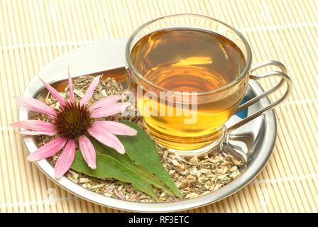 Eastern Purple Coneflower (Echinacea purpurea) herbal tea, medicinal tea - Stock Photo