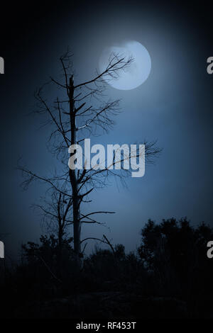 Dead tree in a full moon night. Added some digital noise - Stock Photo