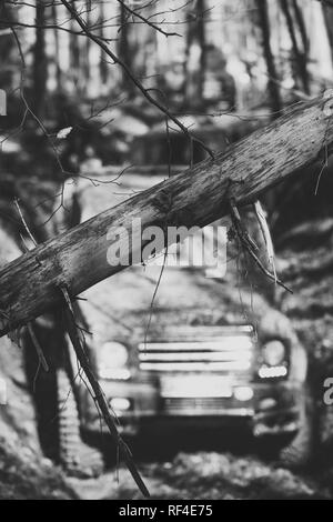 Dirty offroad cars overcome obstacles in fall forest, selective focus. - Stock Photo