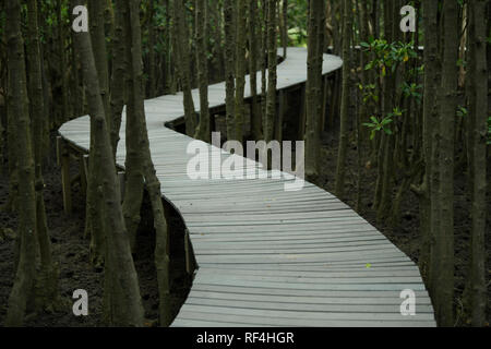 Durban, KwaZulu-Natal, South Africa, curve of footpath through Black Mangrove trees in coastal forest - Stock Photo