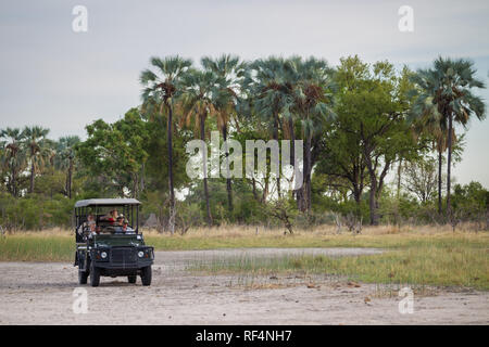 When the flood waters recede from the Okavango Delta, exploration by open game drive vehicles is the best way to spot wildlife. - Stock Photo