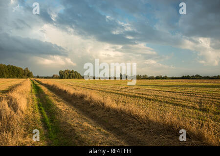 Road through a mowed field, trees on the horizon and evening clouds on the sky - Stock Photo