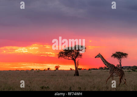 Sunset in the Wild! - Stock Photo