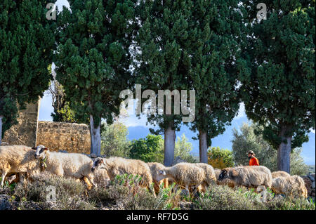 A shepherd with his flock above Kardamyli in the Outer Mani, Peloponnese, Southern Greece - Stock Photo
