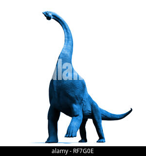 Brachiosaurus altithorax from the Late Jurassic (blue 3d illustration isolated on white background) - Stock Photo