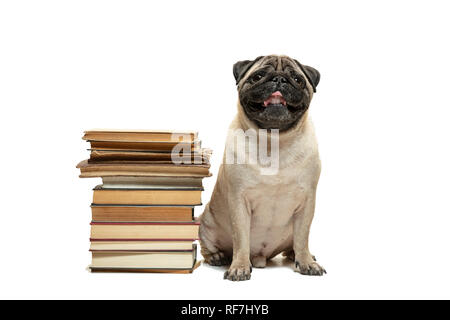 The smart intelligent pug puppy dog sitting down between piles of books isolated on white background - Stock Photo