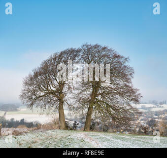 Winter beech trees on the edge of a ploughed field covered in snow  in the cotswold countryside. Chipping campden, Cotswolds, Gloucestershire, England - Stock Photo