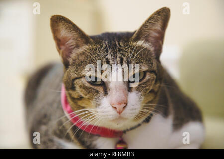 Soft focus a brown Tabby cat kitten sleeping on the bed comfortably and Unimpressed. - Stock Photo
