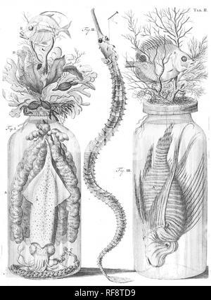 Animals in jars vintage illustration - Stock Photo