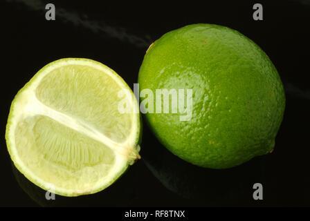 Key Limes (Citrus aurantiifolia) - Stock Photo