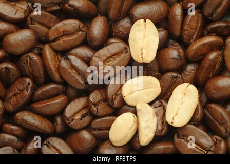 A few fresh coffee beans laying on a bed of roasted coffee beans - Stock Photo