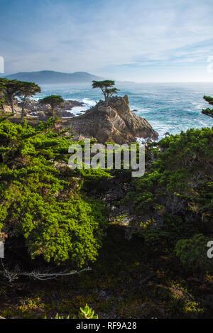 The Lone Cypress near Pebble Beach, CA. - Stock Photo