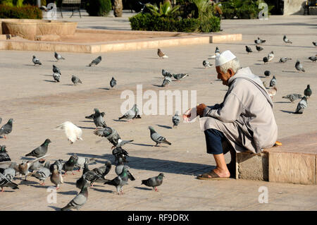 Moroccan Man in Traditional Islamic Clothing Feeding Pigeons in Jemaa El-Fnaa Town Square & Market Place in the Old City Marrakesh Morocco - Stock Photo
