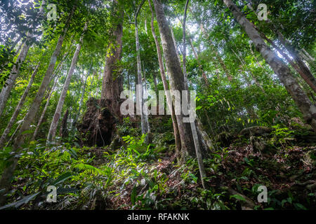 Rainforest in the jungle of Bukit Lawang, North Sumatra, Indonesia. - Stock Photo
