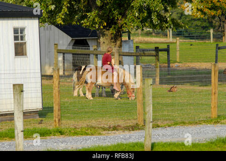 Young Amish Girl Riding Pony on an Amish Farm on a Sunny Autumn Day - Stock Photo
