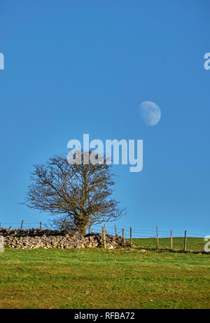 Moon over drystone wall.  Near Taddington, Peak District National Park, Derbyshire, England. - Stock Photo