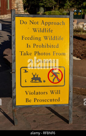 Sign advising visitors not to approach and/or feed animals set up close to the Bright Angle Lodge, South Rim, Grand Canyon National Park, Az, USA. - Stock Photo