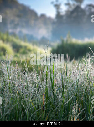 Wet Grass with Dew in The Morning with Blur Mountain and Green Grass Field In The Background. Selective Focus. - Stock Photo