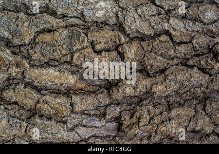 wood texture, natural background , abstract ,old tree - Stock Photo