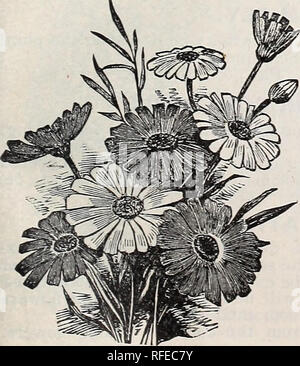 """. Descriptive catalogue : Leonard's seeds. Nursery stock Illinois Chicago Catalogs; Vegetables Seeds Catalogs; Flowers Seeds Catalogs; Grasses Seeds Catalogs; Gardening Equipment and supplies Catalogs. GIANT COMET ASTER BALLOON VINE. A rapid and graceful climber. Sometimes called: """"Love in a Puff."""" Pkt., 5c, BARTONIA AUREA. A pretty flowering plant, producing fine bright yellow blossoms. Pkt., 5c. BALSAM. (LADY SLIPPERS.) Balsams have been so greatly improved by cultivation that with proper treatment and good seed a single flower is the ex- ception now rather than the rule. Hardy ann - Stock Photo"""